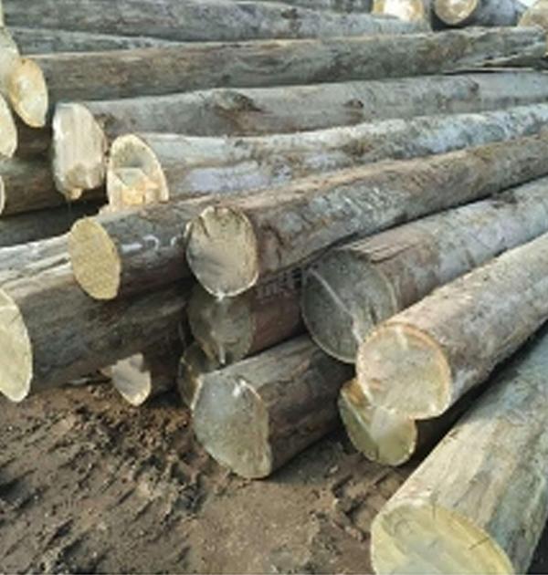 胶合板原木